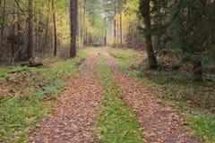 De weg door het herfstbos Stock Fotografie