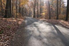 De weg door het herfstbos Stock Foto's