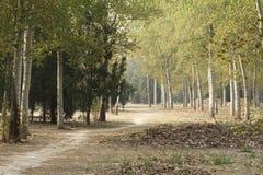 De weg door het hout Royalty-vrije Stock Foto's