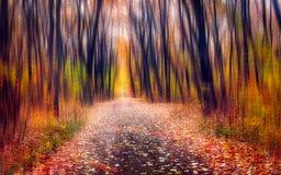 De weg door het magische bos stock afbeeldingen