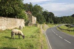 De weg door Hutton le Hole Village, Noord-York legt, Yorkshire vast royalty-vrije stock foto