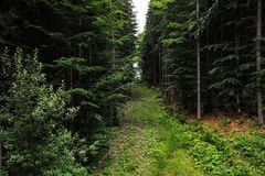 De weg, een weg in het bos in de bergen stock afbeelding