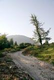 De weg en de boom van de avond Stock Foto's