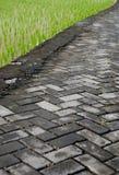 De weg en de padievelden van de steen Stock Foto's
