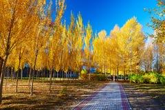 De weg en het herfstlandschap stock fotografie