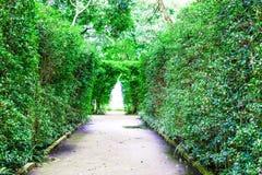 De weg en twee groene bomen Met fontein in het midden royalty-vrije stock fotografie