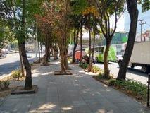 De weg, de gang of de centrale bestrating van een brede weg of een straat, versierden over het algemeen met bomen en installaties royalty-vrije stock afbeeldingen