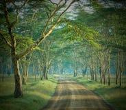 De weg in geheimzinnig bos Royalty-vrije Stock Foto's
