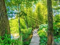 De weg in het bamboebos op de kust van meer i Stock Foto's