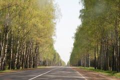 De weg in het bos Royalty-vrije Stock Afbeeldingen