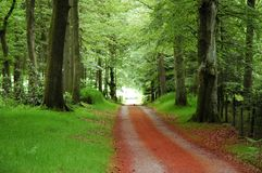 De weg in het bos in de zomer Stock Afbeelding