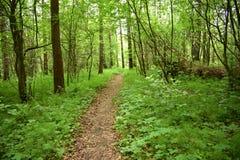 De weg in het bos, het bos is een favoriete vakantievlek voor miljoenen mensen, is het hier dat u vrede van mening kunt vinden stock foto's