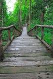 De weg in het bos vooruit Royalty-vrije Stock Fotografie