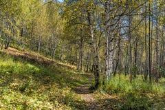 De weg in het de herfstbos Stock Fotografie