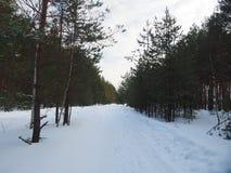 De weg in het de winterbos Royalty-vrije Stock Afbeeldingen