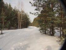 De weg in het de winterbos Royalty-vrije Stock Foto's