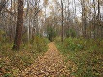De weg in het de herfstbos is behandeld met gevallen bladeren Royalty-vrije Stock Afbeeldingen