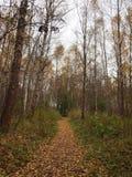 De weg in het de herfstbos is behandeld met gevallen bladeren Stock Foto's