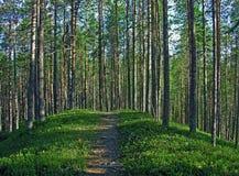 De weg in het hout Royalty-vrije Stock Afbeelding