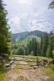De weg in het hout Stock Afbeelding