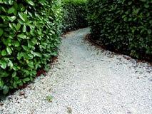 De weg in het labyrint van installaties Royalty-vrije Stock Fotografie