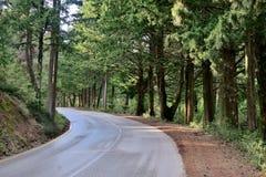 De weg in het midden van het bos met draaien waarop de stralen van de zon stock foto