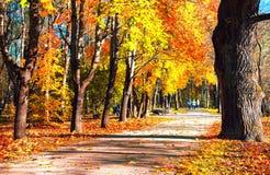De weg in het oude Park in de herfst Royalty-vrije Stock Afbeeldingen