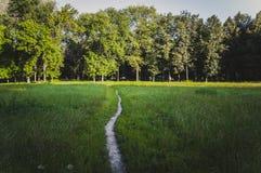 De weg in het park stock afbeeldingen