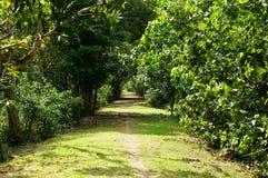 De weg in het Park tussen de struiken Stock Afbeelding