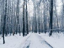 De weg in het sneeuwbos royalty-vrije stock afbeeldingen