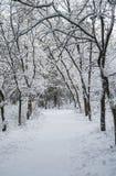 De weg in het snow-covered de winterbos Stock Foto's