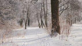 De weg in het de winterbos, de camera beweegt zich, de mening van de eerste persoon stock video