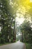 De weg kruist het Regenwoud met Oranje Licht Stock Afbeelding