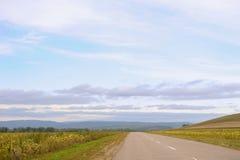 De weg langs een gebied met zonnebloemen Stock Afbeelding