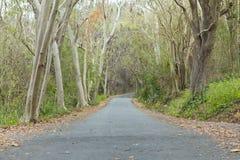De weg is leeg in de herfst in de avond van heldere dagen royalty-vrije stock foto's