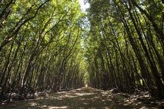De weg in de mangrove bij kan de Aapeiland van Gio ` s, Zuid-Vietnam royalty-vrije stock afbeeldingen