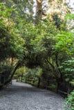 de weg onder bomen Stock Afbeelding