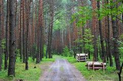 De weg onder het Bos Poolse Juragebergte Royalty-vrije Stock Foto