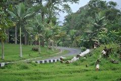 De weg op het gebied van de botanische tuin van Bedugul Bali royalty-vrije stock foto's