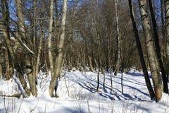 De weg op Pancir, de winterlandschap, Zelezna Ruda, Tsjechische Republiek Royalty-vrije Stock Afbeelding
