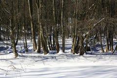 De weg op Pancir, de winterlandschap, Zelezna Ruda, Tsjechische Republiek Stock Foto