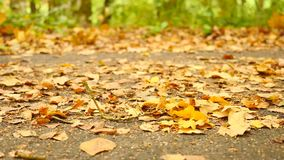 De weg in park, berk, beuken en esdoorns gaat ter plaatse weg Loopschoenen op achtergrond in werking die worden gesteld die Langz stock video