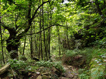 De weg reiste minder, gereist - weg door weelderig groen hout Stock Foto