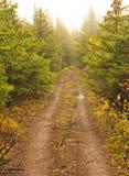 De weg van bomen Stock Afbeelding