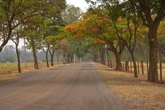 De Weg van bomen stock fotografie