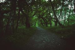 De Weg van de boomboog stock foto's