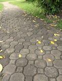 De weg van de baksteenvloer en kleuren van daling Stock Foto's