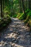 De weg van de berg stock foto's