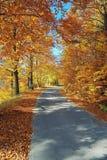 De Weg van de berg in de herfst stock afbeeldingen