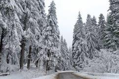 De weg van de berg door bos in de winter. De berg van Rila, Borovetz Stock Afbeelding